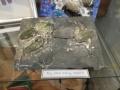 trilobite-montage-jack-kelly