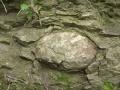 nodule-in-silurian-ludlow-shale