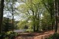 Seggy Pool, Dudmaston Estate, Shropshire