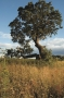 forest-oak-quatford