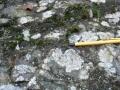 lichen-ivy-scar-rock-malvern-hills