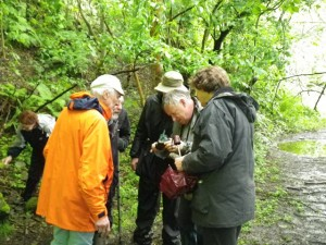 Chris Darmon and others on the Loxter Ashbed Champions guided walk trying to identify fossils in quarry spoil along the pathside