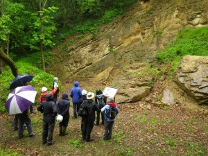 The geology of Loxter Ashbed Quarry dates to the Silurian period of time, approximately 422 million years ago. The anticlinal structure of the rocks is clearly visible and very striking