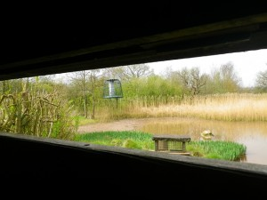 From inside the hide looking across the wetland