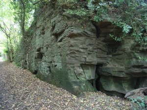 Carboniferous sandstone exposed along a footpath (former tramway) in SVCP