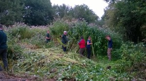 Volunteer conservation days at Severn Valley Country Park
