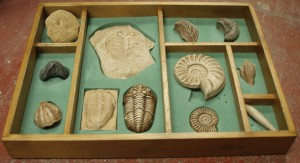 Box of fossils
