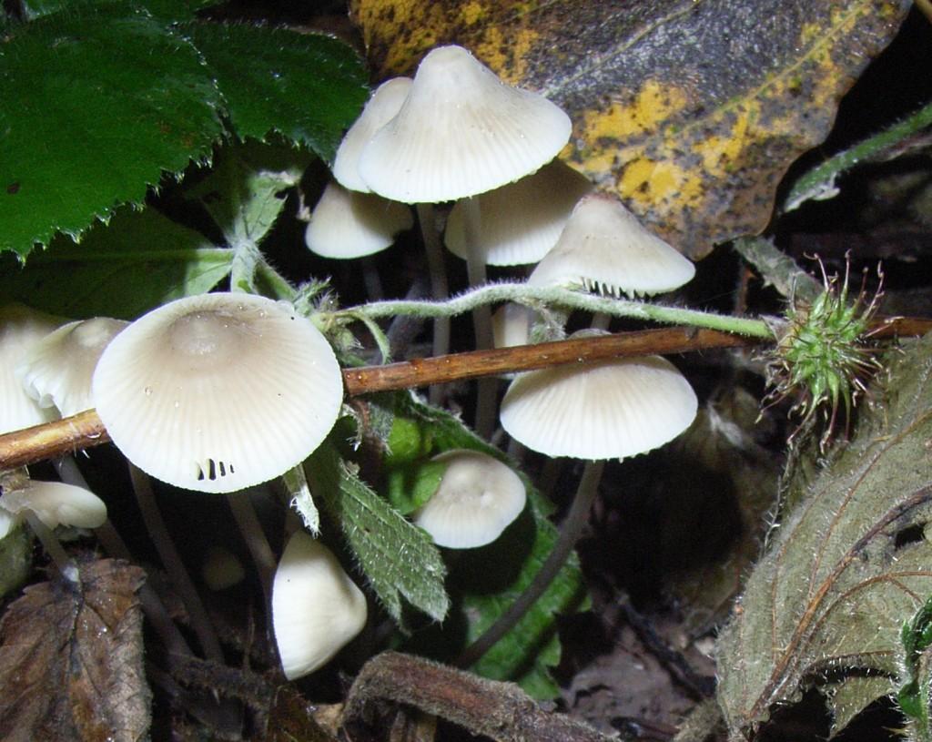 Fungi, Teme Valley