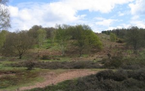 Hartlebury Common