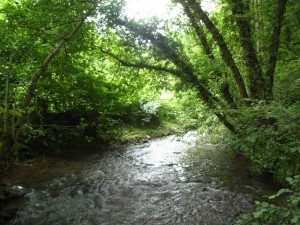 Leigh Brook, Knapp and Papermill Nature Reserve