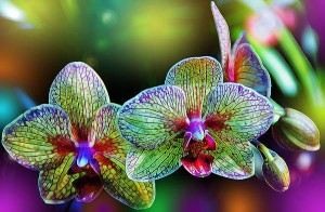 A passion for orchids