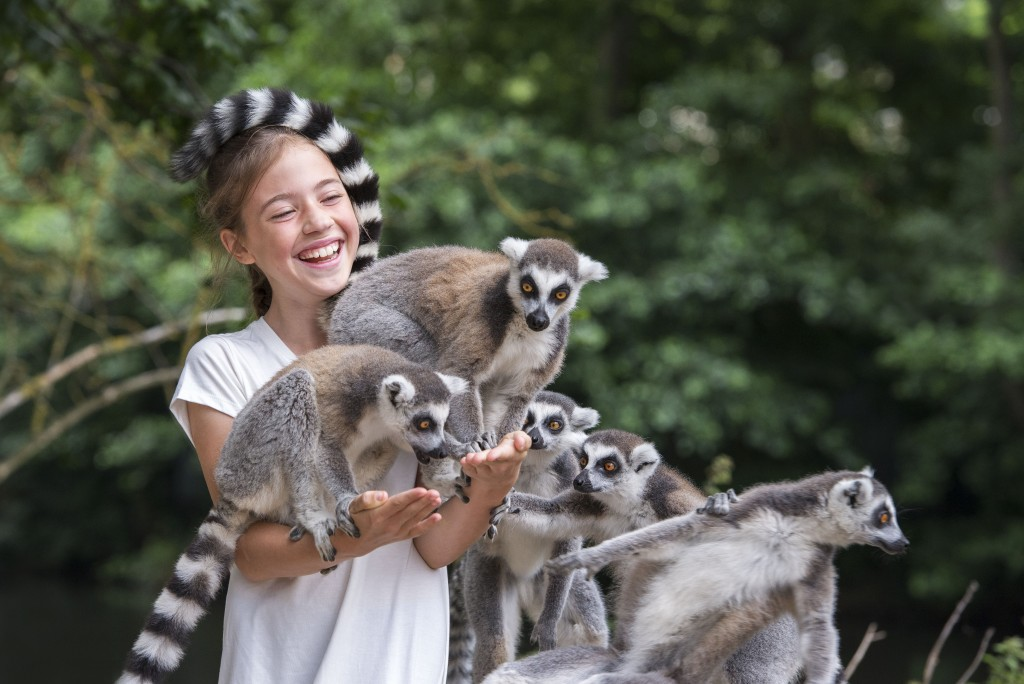 Lemur_Feed_01[1]
