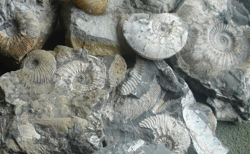 GG Fossils